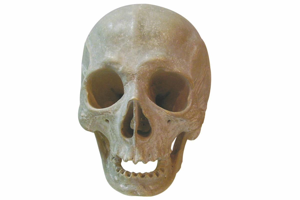 Crâne ou Vanité, attribué à Ligier RICHIER (vers 1500 -1567), marbre, Don Barrois 1876 (inv.85.4.16).